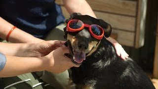 Youtube thumbnail for Helpful accessories for your dog