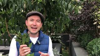 Pruning bay trees with Lee Bestall
