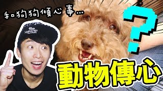 【Animal Communication】What Muffin wanna tell me is...