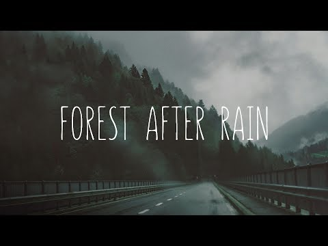 Forest After Rain | Beautiful Chillstep Mix