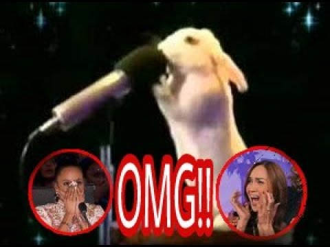 Top 5 best auditions animals, America's Got talent 2017 (видео)