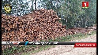 Женщина пыталась украсть лес. Зона X