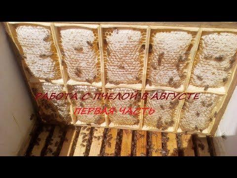 Подготовка к зимовке точка - мёд, гнездо, обработка, часть первая