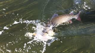 Река уфа в свердловской области рыбалка