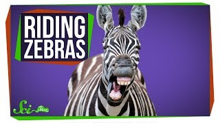 Why do we ride horses but not zebras?