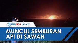 Muncul Semburan Api di Sawah Desa Sukaperna Indramayu, BPBD Beri Penjelasan