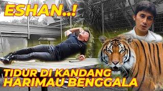 Assalamualaikum guys..!  Akhirnya,gw bersama team pergi ke Bandung khusus untuk ke rumahnya Alshad Ahmad. Mau melihat Harimau-nya Alshad, Eshan yang akan menempati kandang barunya Disamping rumah Alshad yang super besar dan mewah itu Guyss.. Luas dan bersih banggeettt Guys.. Gw nyaman untuk tidur-tiduran di kandang Eshan. Dan juga kandang Eshan ini  dilengkapi cctv juga lho guys biar bisa memantau keadaan sekitar kandang Eshan Tersebut. Tonton langsung guys videonya.   Jangan lupa juga Subscribe channel Alshad yaaa. https://www.youtube.com/channel/UC3vEIgE_o46HVa8QrPa8Svg  #harimau #alshadahmad #faunairfan #dehakimschannel #dehakimschannel  Jangan lupa subscribe juga dehakims junior yaaa https://www.youtube.com/channel/UCVe2ysE1M67pnqPd74tlEyA  Follow on Official Website : http://irfanhakim.com/ Twitter : https://twitter.com/irfanhakim Facebook : https://web.facebook.com/theirfanhakim Instagram : https://www.instagram.com/irfanhakim75/
