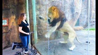 Coole Videos #323 || ✪ Stern DuTube