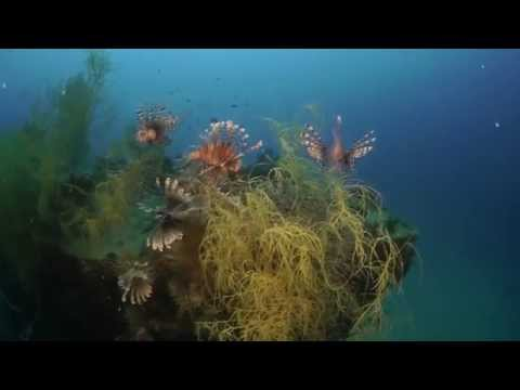 Sangat Island Dive Resort - Diving Overview (Official)