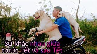 Củ Cải - Những thay đổi bất ngờ trước và sau Tết | My dog's changes before and after Tet Holiday