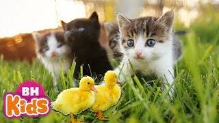 Bài Hát Thiếu Nhi Con Vât Cho Bé 🐥Ai Cũng Yêu Chú Mèo 😺 Thật Là Hay | Nhạc Thiếu Nhi