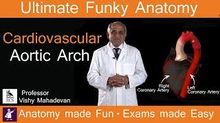 Cardiovascular Heart: Aortic Arch. Anatomy made Fun. Exam made Easy!