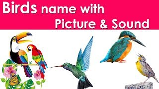 indian birds name with picture - मुफ्त ऑनलाइन