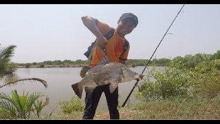 CÂU CÁ CHẼM KHỦNG ( CÁ VƯỢC ) MIỀN TÂY | FISHING SEABASS !