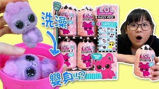 【玩具】LOL驚喜毛毛寵物瓶/LOL surprise Ruzzy Pets full box unbox[NyoNyoTV妞妞TV玩具]