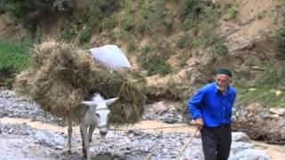 Yavuz Bingöl Oy Yaylalar