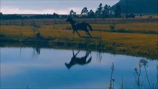 Cavalo Campeiro Gatilho