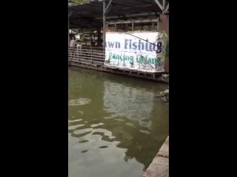 Pasir ris pond fishing