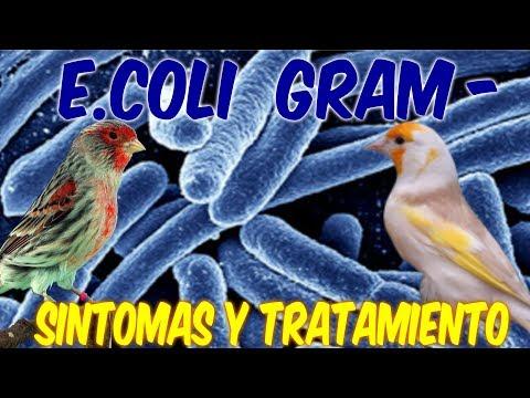 Prostata-Sekretion Analyse der Spermien