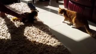 ПРИКОЛЫ С КОШКАМИ 2016 FUNNY CATS 2016