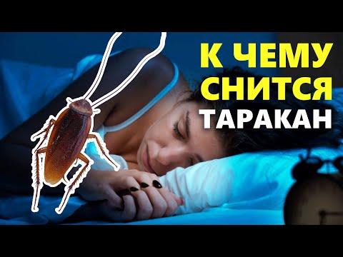 К чему снятся тараканы, тараканы во сне, толкование снов по сонникам