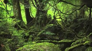 Joe Hisaishi  Princess Mononoke  もののけ姫  Arranged