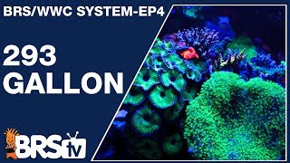 This is how to keep a 293 gallon Mixed Reef Tank - The BRS/WWC System Ep4 | BRStv Investigates