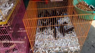 Cửa Hàng Chim Cảnh Tại Mỹ Tho!