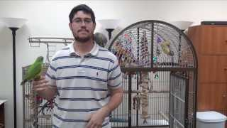 How much time should a parrot spend outside the cage every day?