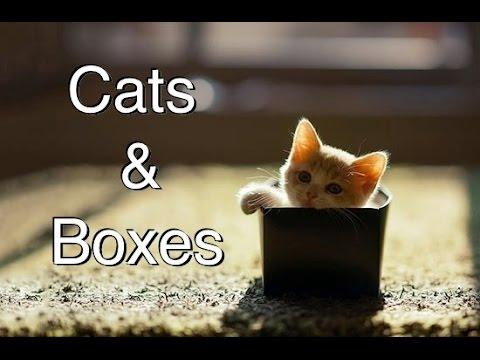 Você ama gatos? Então assista esse video hilário...