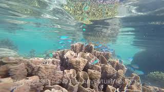 Fiji holiday- snorkelling