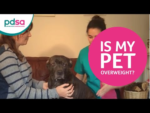 PDSA vet Vicki Larkham shows how to tell if your dog or cat is overweight.