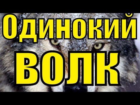 Песня шансон Одинокий волк Виталий Цаплин Блатной удар блатные песни