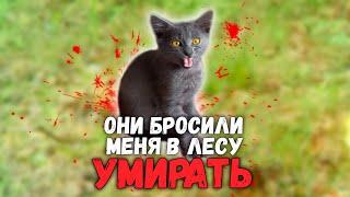 Спасение котенка из леса за 24 часа. Полная версия / SANI vlog