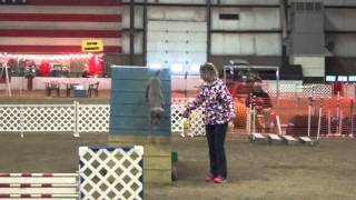 preview picture of video 'Pretzel - Springfield OH AKC agility'