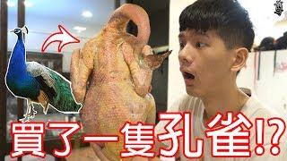 【尊】我買了一隻孔雀來吃吃看啦!!!??