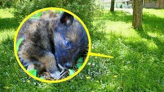 Люди заметили в зарослях травы крохотного безжизненного щенка...