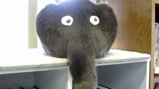 Кото-слоник