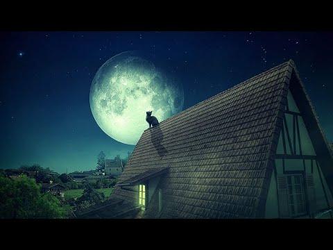 Лает ночь неспокойная, лунная...