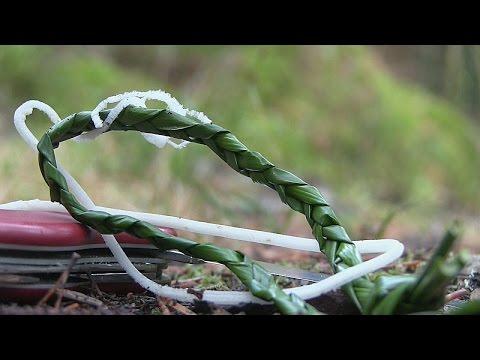 Die Behandlung warikosa von den Blättern der Klette