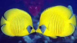 Battiato-La estacion de los amores-La stagione dell'amore