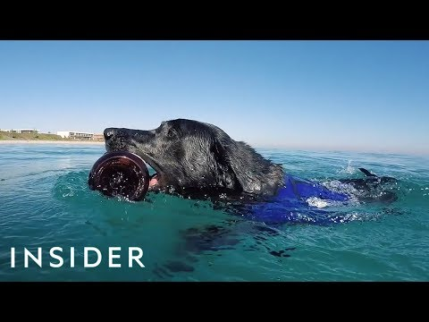 The Diving Dog Helping to Clean the Oceans