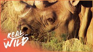 Animal Kingdom - Hyena & Rhino [Documentary Series] | Real Wild