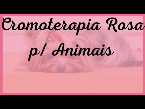 Cromoterapia Rosa + Musicoterapia Relaxamento - Para Animais