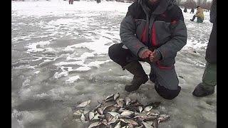 Прикормка coppens red halibut super crush
