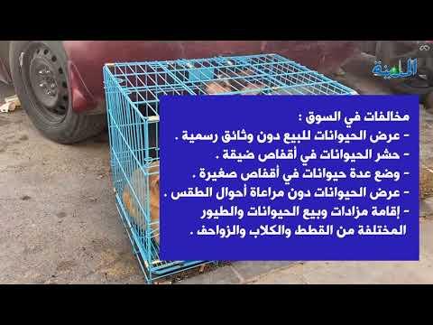 سوق الطيور بالعزيزية إقبال كبير وسط غياب للإجراءات الإحترازية والتباعد