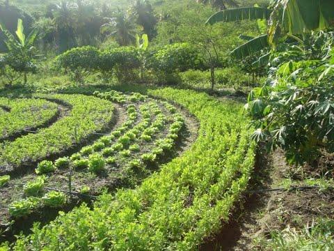 Direitos Humanos - Incentivos à agricultura familiar e Cúpula dos Sistemas Alimentares - 12/05/2021