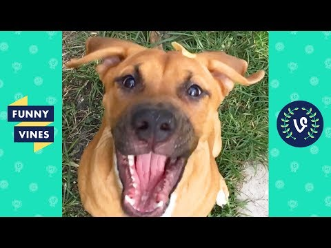 TRY NOT TO LAUGH - Cutest Pets and Funny Animals!