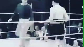 Хитрый боксёр смотрите