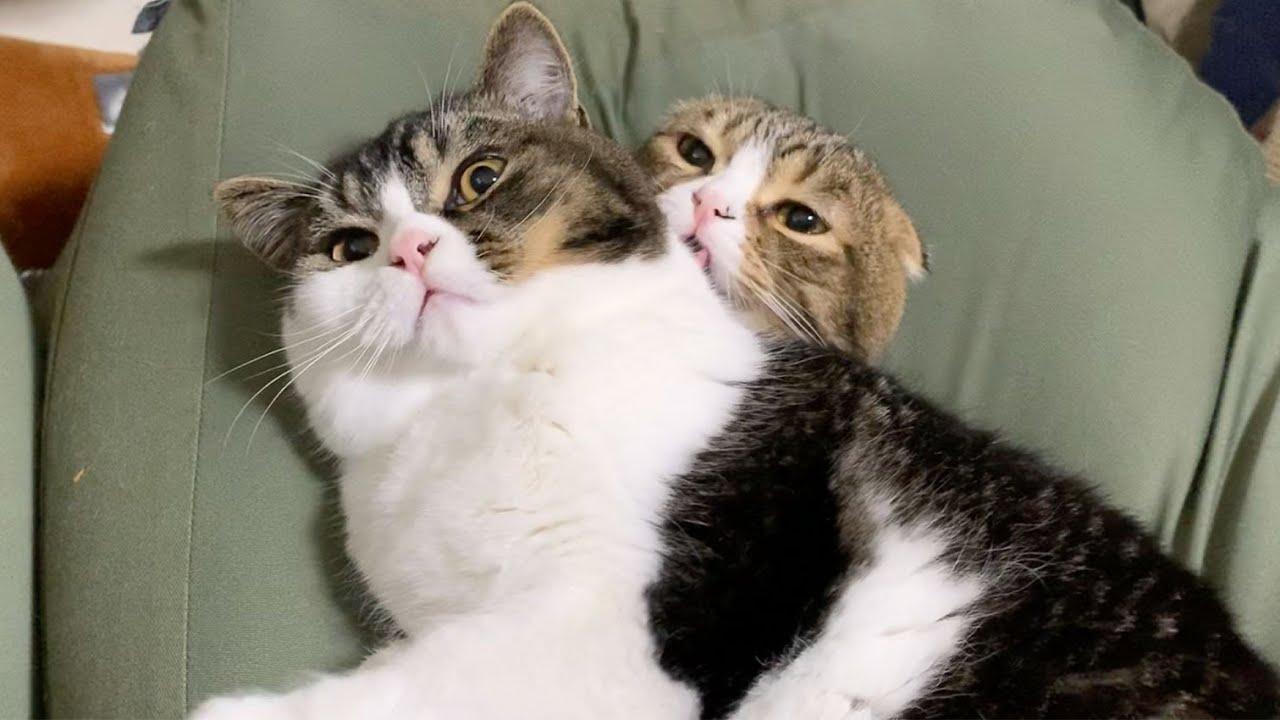 朝からドヤ顔でパパ猫に甘える子猫